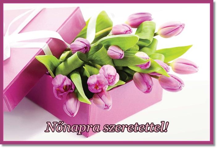 nonap_tulipan.jpg